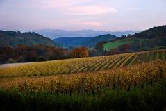 Los viñedos acercan a los Pyrenees. imagen de archivo libre de regalías