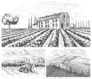 Los viñedos ajardinan, los campos de Toscana, viejo estilo de mirada del scratchboard o del tatuaje para los menús y señalización libre illustration