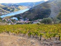 Los viñedos colgantes forman las laderas del ` s el Duero River Valley de Portugal fotos de archivo