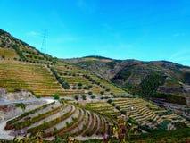 Los viñedos colgantes forman las laderas del ` s el Duero River Valley de Portugal imágenes de archivo libres de regalías