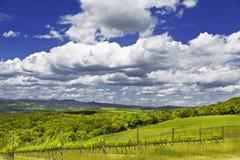 Los viñedos del día soleado del claro de Toscana Imagenes de archivo