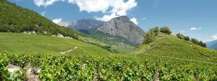 Los viñedos del saillon Wallis Suiza Imagenes de archivo