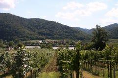 Los viñedos del valle de Wachau pasan por alto el Danubio Foto de archivo