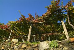 Los viñedos en el camino viejo llamaron vía Francigena Imagenes de archivo