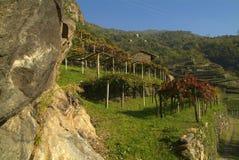 Los viñedos en el camino viejo llamaron vía Francigena Foto de archivo libre de regalías