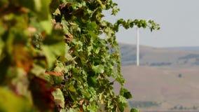Los viñedos hermosos ajardinan con las turbinas de viento en el fondo almacen de video