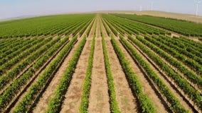 Los viñedos hermosos ajardinan con las turbinas de viento en el fondo, visión aérea almacen de video
