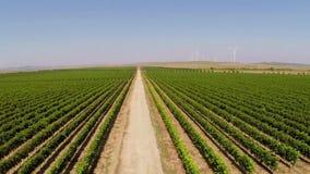 Los viñedos hermosos ajardinan con las turbinas de viento en el fondo, visión aérea almacen de metraje de vídeo