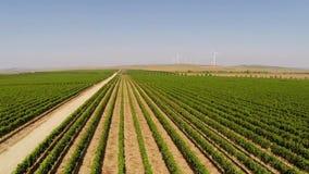 Los viñedos hermosos ajardinan con las turbinas de viento en el fondo, visión aérea metrajes