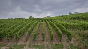 Los viñedos ven de la ciudad imagenes de archivo