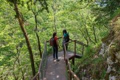 Los viajeros viajan en el camino artificial en el bosque de la reserva de las montañas Caminantes activos Imagenes de archivo