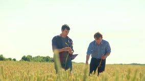 Los viejos dos granjeros exploran están estudiando sirva el verano del campo de trigo en el pan del trigo del campo cultivo elega metrajes