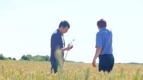 Los viejos dos granjeros exploran están estudiando sirva el verano del campo de trigo en el pan del trigo del campo cultivo elega almacen de video