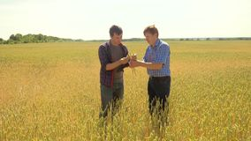 Los viejos dos granjeros exploran están estudiando sirva el verano del campo de trigo en el pan del trigo del campo vídeo de la c almacen de metraje de vídeo