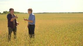 Los viejos dos granjeros exploran están estudiando sirva el verano del campo de trigo en el pan del trigo del campo vídeo de la c almacen de video