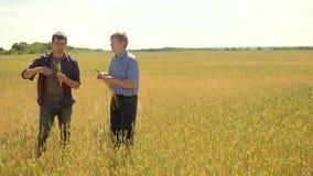 Los viejos dos granjeros exploran están estudiando sirva el verano del campo de trigo en el pan del trigo del campo vídeo de la c metrajes