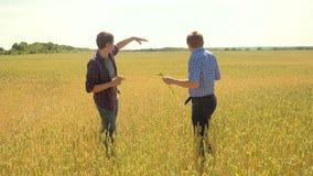 Los viejos dos granjeros exploran están estudiando a su smartphone sirva el verano del campo de trigo en el pan del trigo del cam metrajes