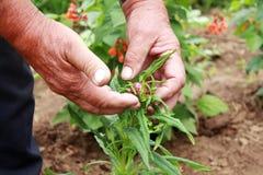 Los viejos granjeros entregan sus flores de la paja imágenes de archivo libres de regalías