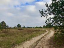 Los vientos del camino de tierra con el otoño del bosque ajardinan en los abetos del Forest Green y los abedules amarilleados con Imagenes de archivo