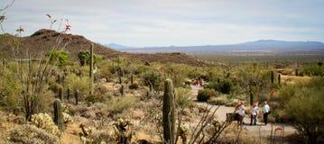 Los visitantes disfrutan de la primavera en el desierto Imagenes de archivo