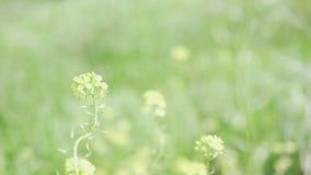 Los wildflowers amarillos hermosos se sacuden en la hierba gruesa