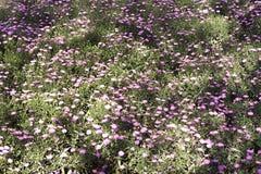 Los wildflowers del borde de la carretera imágenes de archivo libres de regalías