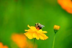 Los Wildflowers en la brisa con manosean la abeja Foto de archivo libre de regalías