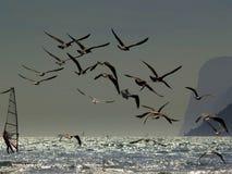 Los windsurfers y las gaviotas fotografía de archivo