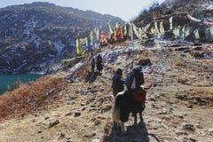 Los yacs turísticos del paseo con más doméstico quién tirón y lo controlan para caminar a la montaña con las banderas de la nieve Fotos de archivo libres de regalías