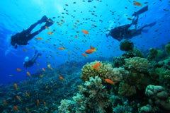 Los zambullidores de equipo de submarinismo exploran el filón coralino imagenes de archivo