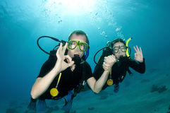 Los zambullidores de equipo de submarinismo nadan juntos Imagen de archivo libre de regalías