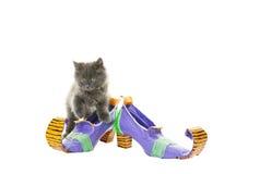 Los zapatos y su gato de la bruja Fotografía de archivo