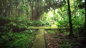 Losas demasiado grandes para su edad con el musgo Paseo a través de la trayectoria de la selva tropical almacen de metraje de vídeo