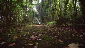 Losas demasiado grandes para su edad con el musgo Paseo a trav?s de la trayectoria de la selva tropical almacen de video