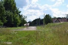 Loschadi en el camino Foto de archivo libre de regalías