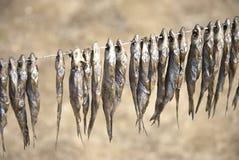 Stockfish Lizenzfreies Stockfoto