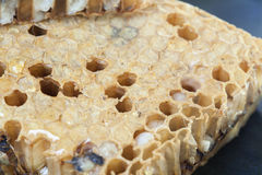 lose up honeycomb and honey Royalty Free Stock Image