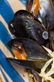 Сlose-up сooked mussels in shells Stock Photo