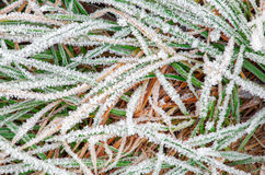 Сlose up photo of frosty morning grass Royalty Free Stock Photos