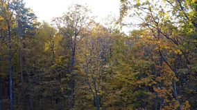 Сlose-up view of the trees in forest with yellow foliage stock video footage