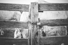 Сlosed horse Stock Image