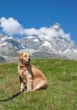 Losgebundener Hund und Berge Lizenzfreies Stockfoto