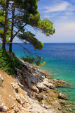 Losinj beach. Island Losinj, beach in Croatia and pine tree Stock Photography