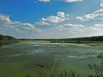Losinyy Ostrov, Forest Lake Lizenzfreies Stockfoto