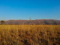 Loskop Nature Reserve Royalty Free Stock Photo