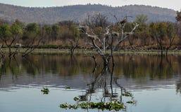 Loskop Nature Reserve Stock Photos