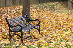 Loss Bereavement Concept Empty Park Bench. Loss or bereavement concept empty park bench surrounded by trees and golden Autumn or Fall leaves Royalty Free Stock Photos