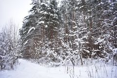 With the loss of a large amount of snow, the first short frosts. Nature in winter puts on a white coat, snow falls asleep once flowering glades, trees dress up stock images