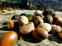 Losse noten in het hout stock fotografie