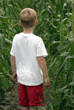 Are We Lost?. A boy standing between rows of corn Royalty Free Stock Photos
